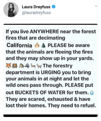 Animals, Tumblr, and Lost: Laura Dreyfuss  @lauradreyfuss  If you live ANYWHERE near the forest  fires that are decimating  California (3 PLEASE be aware  that the animals are fleeing the fires  and they may show up in your yards.  膩63 4 The forestry  department is URGING you to bring  your animals in at night and let the  wild ones pass through. PLEASE put  out BUCKETS OF WATER for them.  They are scared, exhausted & have  lost their homes. They need to refuel emphatically-enthusiastic: Important! Please reblog!