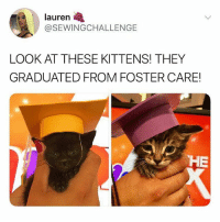 @ladbible is hilarious 😂: lauren  @SEWINGCHALLENGE  LOOK AT THESE KITTENS! THEY  GRADUATED FROM FOSTER CARE  HE @ladbible is hilarious 😂