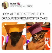 Tag someone to brighten up their day 🌞🐱 Follow me @peopleareamazing for the most adorable posts 💕: lauren  @SEWINGCHALLENGE  LOOK AT THESE KITTENS! THEY  GRADUATED FROM FOSTER CARE!  HE Tag someone to brighten up their day 🌞🐱 Follow me @peopleareamazing for the most adorable posts 💕