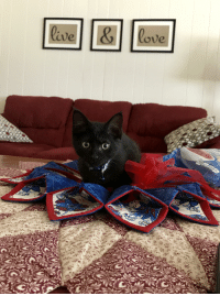 Happy 4th of July from Paco the Kitten!: lave  ove  0, Happy 4th of July from Paco the Kitten!
