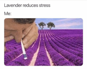 Lavender: Lavender reduces stress  Мe:
