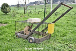 Eco, Eco Friendly, and More: lawg mower A little slower but more eco-friendly