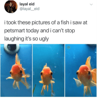 Saw, Ugly, and Fish: layal eid  @layal_eid  i took these pictures of a fish i saw at  petsmart today andican't stop  laughing it's so ugly