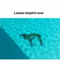 Deer, Memes, and Dolphin: Laziest dolphin ever Oh wait actually its a dead deer
