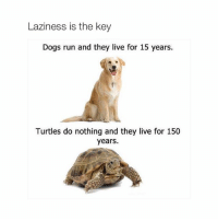 dog run: Laziness is the key  Dogs run and they live for 15 years.  Turtles do nothing and they live for 150  years.