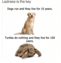 ⠀: Laziness is the key  Dogs run and they live for 15 years.  Turtles do nothing and they live for 150  years. ⠀
