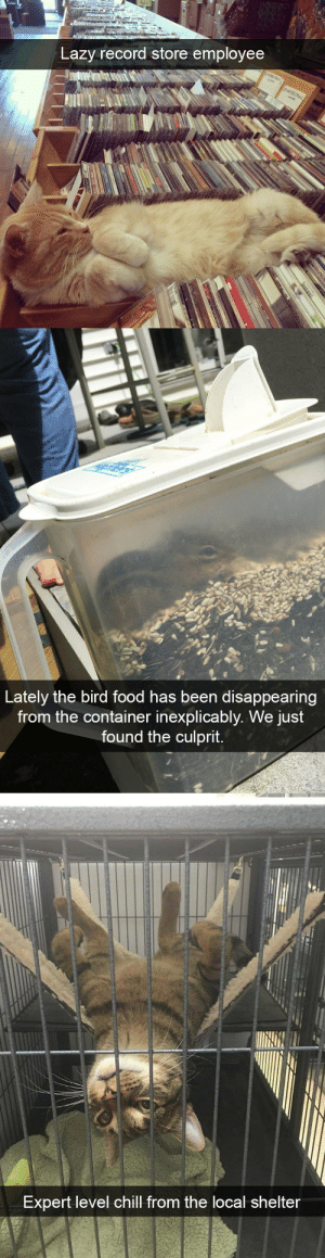 animalsnaps:Animal snaps: Lazy record store employee   Lately the bird food has been disappearing  from the container inexplicably. We just  found the culprit.   Expert level chill from the local shelter animalsnaps:Animal snaps