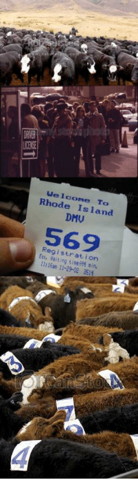 Me IRL: LCENSE  Welcome To  Rhode Island  DMU  569  Reg i strat i on  Est, 남aiting time侜4 min,  11:16an 11-29-02 351  4 Me IRL