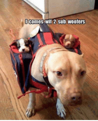 Sub: lcomes wif 2 sub woofers