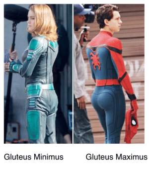 Maximus, Memes, and Reddit: LD  Gluteus Minimus  Gluteus Maximus Memes aside though, they both have nice butts