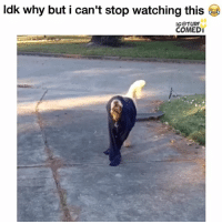 Memes, 🤖, and Stop Watch: ldk why but i can't stop watching this  IG TURF  COMEDI Lmaooo poor dog 😭