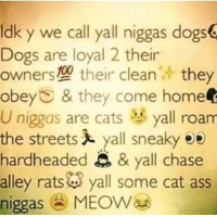 Memes, Chase, and Coming Home: ldk y We call yall niggas dogs  Dogs are loyal 2 their  owners their clean  they  obey & they come home  U niggas are cats all roam  the streets yall sneaky ee  hardheaded  & yall chase  alley rats  yall some cat ass  niggas  MEOW