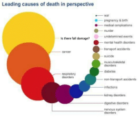 Only one way to find out: Leading causes of death in perspective  war  pregnancy &birth  .--  medical complications  murder  undetermined events  Is there fall damage?  mental health disorders  transport accidents  suicide  musculoskeletal  cancer  disorders  diabetes  respitatory  disorders  non-transport accidents  infections  kidney disorders  digestive disorders  nervous system  disorders Only one way to find out