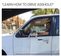 """Dank, Driving, and Drive: """"LEARN HOW TO DRIVE ASSHOLE!""""  Tank Sinatra ~Kingslayer of Delet Dis  Checkout : Pokémon GO"""