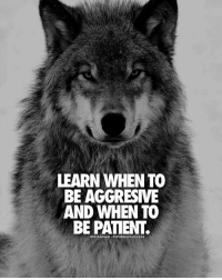 Memes, Aggressive, and 🤖: LEARN WHEN TO  BE AGGRESIVE  AND WHEN TO  BE PATIENT.  INSTAGRAM -#WORDS2SUCCESS Double tap if you agree👌 words2success Aggressive*