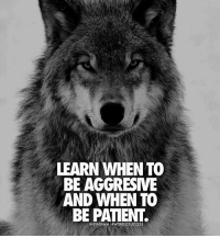 Friends, Memes, and Patient: LEARN WHEN TO  BE AGGRESIVE  AND WHEN TO  BE PATIENT. DOUBLE TAP if you agree👊 words2success - TAG a friends to inspire!!