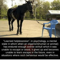 """Aversion: """"Learned helplessness"""", in psychology, a mental  state in which when an organism(human or animal)  has endured enough averse stimuli which it was  unable to escape or avoid, it gives up and becomes  unable to learn escape in the future, even in  situations where such behaviour would be effective.  fb.com/factsweird"""