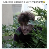 Memes, Omg, and Spanish: Learning Spanish is very important! Haha omg Follow @comedy.com for more! Credit: @twan