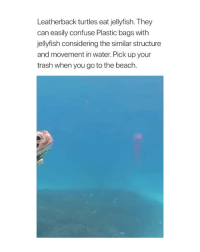 Trash, Beach, and Water: Leatherback turtles eat jellyfish. They  can easily confuse Plastic bags with  jellyfish considering the similar structure  and movement in water. Pick up your  trash when you go to the beach. pick up your trash goddamn