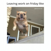Ready for the WEEKEND | For more @hilarious.ted 🔊🔊: Leaving work on friday like  hilarious ted Ready for the WEEKEND | For more @hilarious.ted 🔊🔊