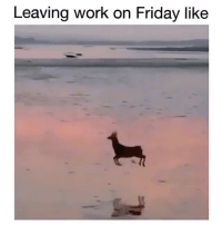 We started a new page called @animalsdoingthings and it's all animal videos and they're all hilarious. Check it out: Leaving work on Friday like We started a new page called @animalsdoingthings and it's all animal videos and they're all hilarious. Check it out
