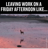 Friday, Memes, and Work: LEAVING WORK ONA  FRIDAY AFTERNOON LIKE  02 We all know the feeling... 😝😂