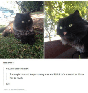 derpomg-humor.tumblr.com: lebaenese:  secondhand-mermaid:  The neighbours cat keeps coming over and I think he's adopted us. I love  him so much.  Me  Source: secondhand-m... derpomg-humor.tumblr.com