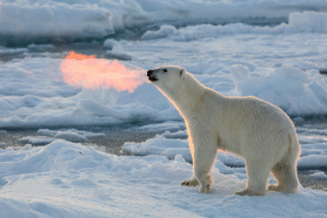 Fire, Global Warming, and Tumblr: led-leviathan:  thatsmoderatelyraven: buttbuttgoose:  blazepress:  Sun rays shine on the warm breath of a polar bear.  Alternate caption: Fire-breathing polar bear shows off his skills  The real cause of global warming   But everything changed when the Fire Bears attacked