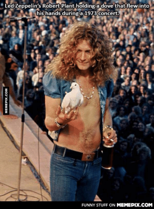 He went full cool.omg-humor.tumblr.com: Led Zeppelin's Robert Plant holding a dove that  his hands during a 1973 concert.  flew into  FUNNY STUFF ON MEMEPIX.COM  MEMEPIX.COM He went full cool.omg-humor.tumblr.com