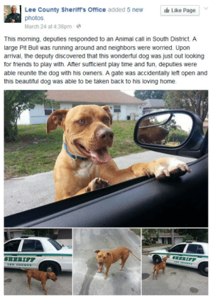 lol-support:  This officer Phillips, we've got a GOOD BOY IN PROGRESS, YESH WE DO, YESH WE DO.: Lee County Sheriff's Office added 5 new  photos.  March 24 at 4:38pm -  It Like Page  This morning, deputies responded to an Animal call in South District. A  large Pit Bull was running around and neighbors were worried. Upon  arrival, the deputy discovered that this wonderful dog was just out looking  for friends to play with. After sufficient play time and fun, deputies were  able reunite the dog with his owners. A gate was accidentally left open and  this beautiful dog was able to be taken back to his loving home.  SHERIFF  SHERIFF  LEE COUNTY lol-support:  This officer Phillips, we've got a GOOD BOY IN PROGRESS, YESH WE DO, YESH WE DO.