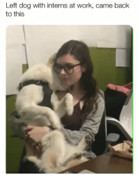 Memes, Work, and Back: Left dog with interns at work, came back  to this Don't know where this is but I need a job there | @cuteandfuzzybunch 👈