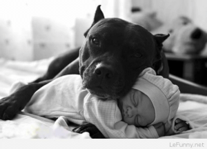 Black, Baby, and Net: LeFunny.net Black dog with a baby