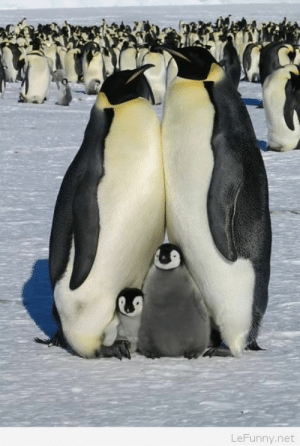 Funny family of penguins picture: LeFunny.net Funny family of penguins picture