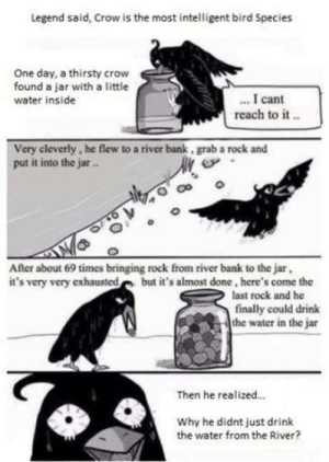 Omg, Thirsty, and Tumblr: Legend said, Crow is the most intelligent bird Species  One day, a thirsty crow  found a jar with a little  water inside  I cant  reach to it..  Very cleverly, he flew to a river bank, grab a rock and  put it into the jar  After about 69 times bringing rock from river bank to the jar  it's very very exhausted but it's almost done, here's come the  last rock and he  finally could drink  the water in the jar  Then he realized..  Why he didnt just drink  the water from the River? omg-humor:  Work smarter, not harder