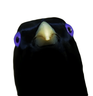 Lemme Smash Bird transparent PNG - StickPNG: Lemme Smash Bird transparent PNG - StickPNG