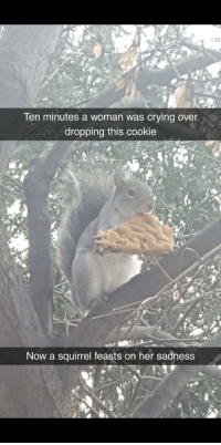 Crying, Best, and Squirrel: len minutes a woman was crying over  dropping this cookie  Now a squirrel feasts on her sadness This was the best part of my day