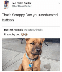 Animals, Memes, and Scooby Doo: Leo Blake Carter  @LeoBlakeCarter  That's Scrappy Doo you uneducated  buffoon  Best Of Animals @BestofAnimalls  lil scooby doo Ffs