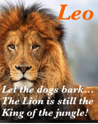 7/31: Leo  dogs bark  Let the dogs bark..  The Lion is still the  King of the jungle! 7/31
