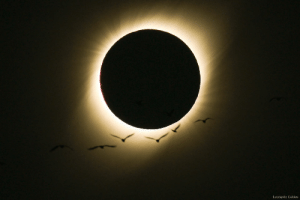 Birds, Eclipse, and Total: Leonardo Caldas Birds During a Total Solar Eclipse