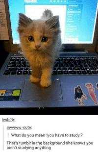Funny Memes Tumblr: lesbirb:  awwww-cute:  What do you mean you have to study  That's tumblr in the background she knows you  aren't studying anything
