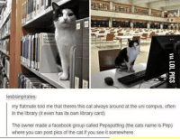 Library Cat: lesblanpirates:  my flatmate told me that theres this cat always around at the uni campus, oftern  in the library it even has its own library card)  The owner made a facebook group called Pepspotting (the cats name is Pep)  where you can post pics of the cat if you see it somewhere Library Cat