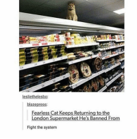 omg so in luv with @spunky rn 😍: lesliethelesbo:  blaze press  Fearless Cat Keeps Returning to the  London Supermarket He's Banned From  Fight the system omg so in luv with @spunky rn 😍