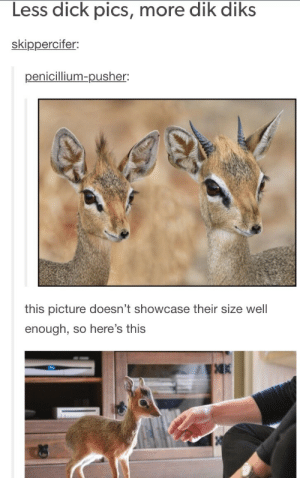 Dick Pics, Omg, and Tumblr: Less dick pics, more dik diks  skippercifen  penicillium-pusher:  this picture doesn't showcase their size well  enough, so here's this  凋K More Dik-diks pls ????omg-humor.tumblr.com