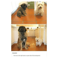 """I am and always will be the smol doggo bc I used to be one of the """"taller kids"""" in my class but now I'm a smol child that is always ready to fight bc everyone grew but I didNT AND WHY DID YOU GUYS LEAVE ME DOWN HERE - Max textpost textposts: lesseroke:  The one on the right looks so upset about this development. I am and always will be the smol doggo bc I used to be one of the """"taller kids"""" in my class but now I'm a smol child that is always ready to fight bc everyone grew but I didNT AND WHY DID YOU GUYS LEAVE ME DOWN HERE - Max textpost textposts"""