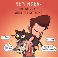 Animals, Cats, and Gooo: LET Gooo  l'LL  FRICKEN  KILL YOU  REMINDER  HUG YOUR CATS  WHEN YOU GET HOME  Sss ss H H  HUSH My  SWEET BABIES Well my  Ricky Biscuits give me hugs.  an you hug your kitties? Via BuzzFeed Animals