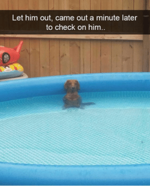 Animals, Dogs, and Memes: Let him out, came out a minute later  to check on him Dog Memes Of The Day 32 Pics – Ep40 #dogs #dogmemes #lovelyanimalsworld - Lovely Animals World