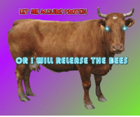 Release The Bees