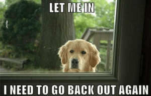 Tumblr, Blog, and Http: LET MEIN  I NEED TO GO BACK OUT AGAIN awesomesthesia:  Always the same…