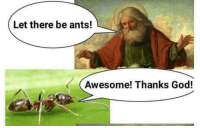 "God, Tumblr, and Blog: Let there be ants!  Awesome! Thanks God! <p><a href=""http://drkshdwbnch.tumblr.com/post/172131238195/awesome-pure-unbridled-joy-tonight"" class=""tumblr_blog"">drkshdwbnch</a>:</p><blockquote><p>awesome pure unbridled joy tonight</p></blockquote>"