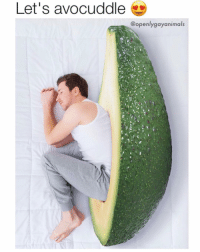 Funny, Life, and Avocado: Let's avocuddle  @openlygayanimals Anyone know where I can get a life sized genetically modified avocado? Willing to pay very little but curious if this exists 😂😂 (@openlygayanimals)